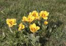 Noch ein Frühlingsfoto