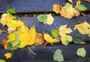 Fotografieren im Herbst: Blätter und Bäume